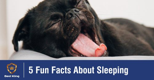 5 Fun Facts About Sleeping